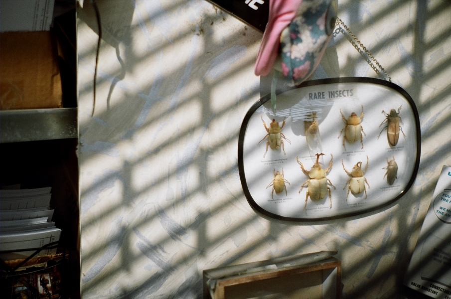 QL17 insects gold200